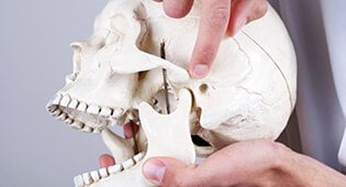 dentists pointing at skull